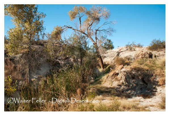 Photo of original Old Woman Spring in Johnson Valley, CA