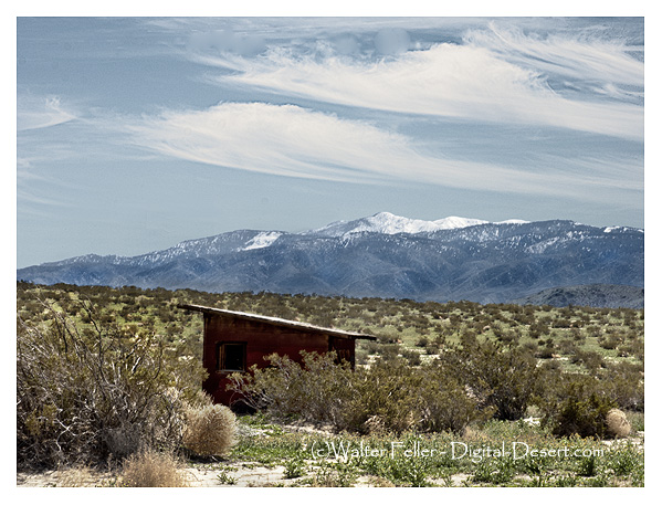 Abandoned cabin in the Mojave Desert