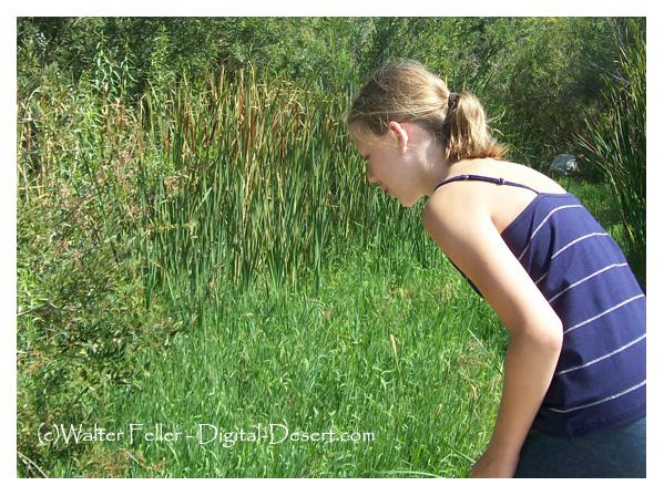 looking into Cajon Creek