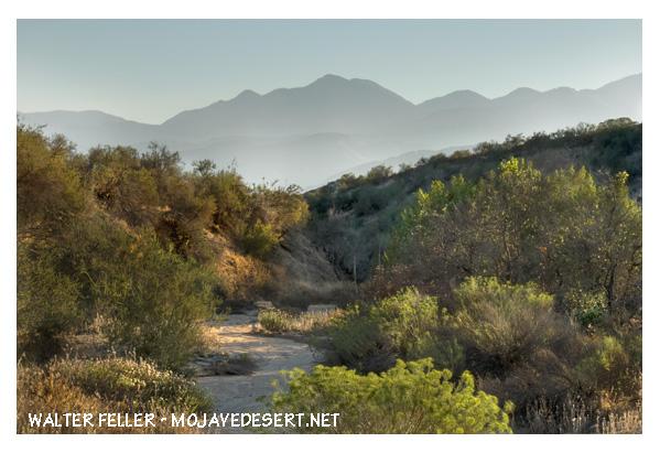 Ravine in Cajon Pass