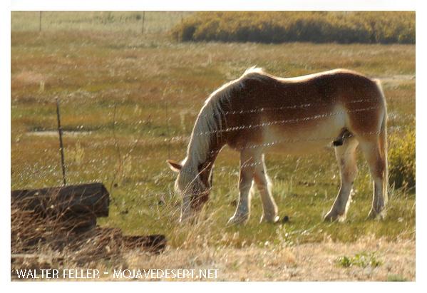 599-horse-DSC_9278