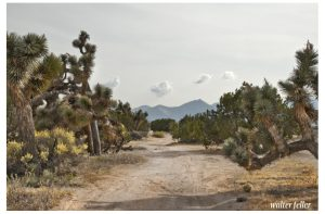Photo of a possible trace of the Old Spanish Trail/Mormon Road near Hesperia