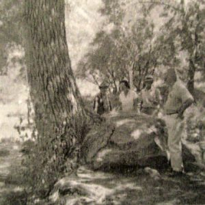 The tree that grew into a rock. Cedar Springs - 1964