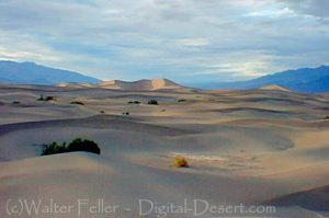 Mesquite Flats Sand Dunes - Death Valley