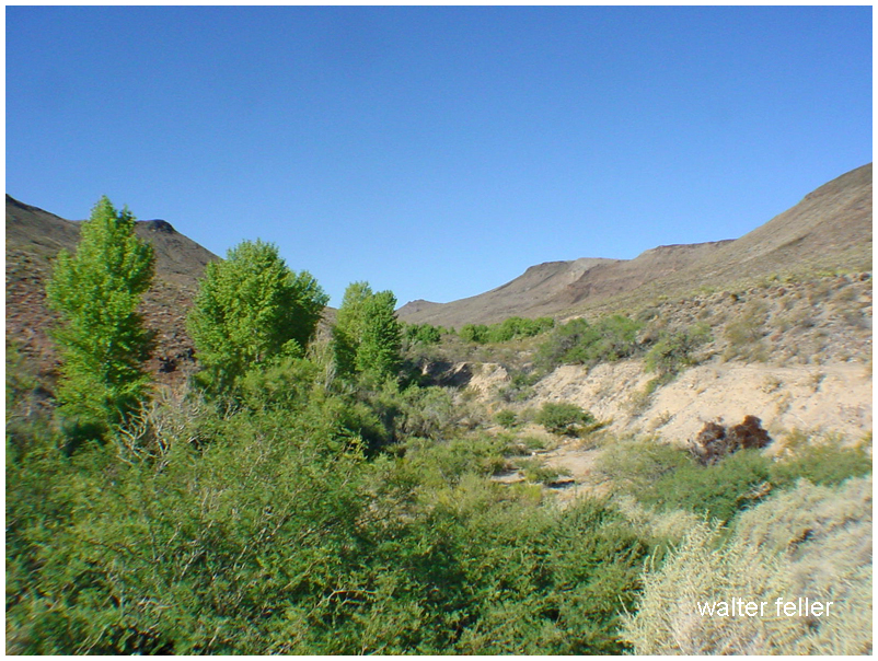 Paiute Creek
