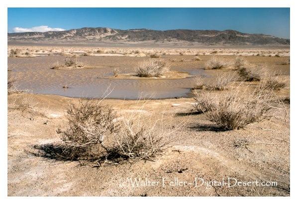 desert waterhole