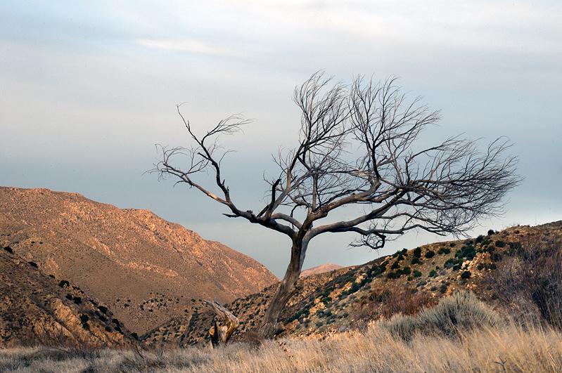 799-tree-dusk-r3585