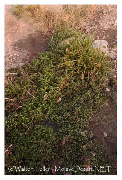 Genesis of Marl Spring