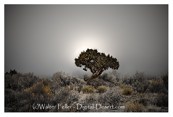599-juniper-fog-r0386-v2