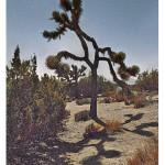 Mojave Desert - Junipers and Joshua tree during full moon.-[