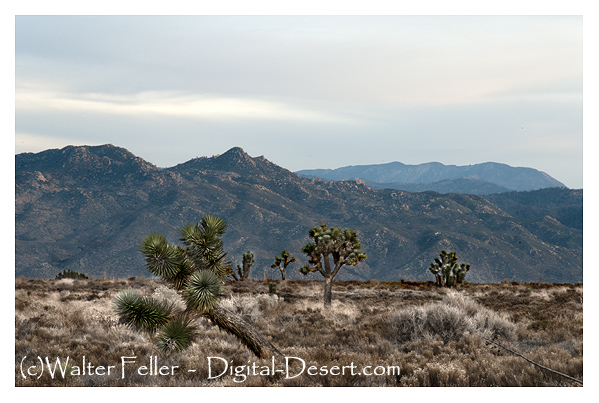 Pilot Knob, Pilot Rock, San Bernardino Mountains