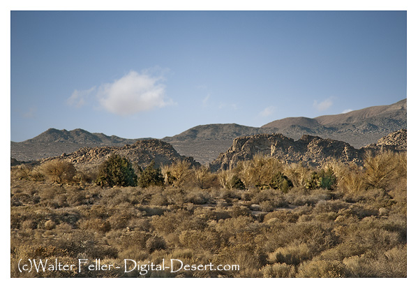 Upper Mojave River Narrows - Victorville