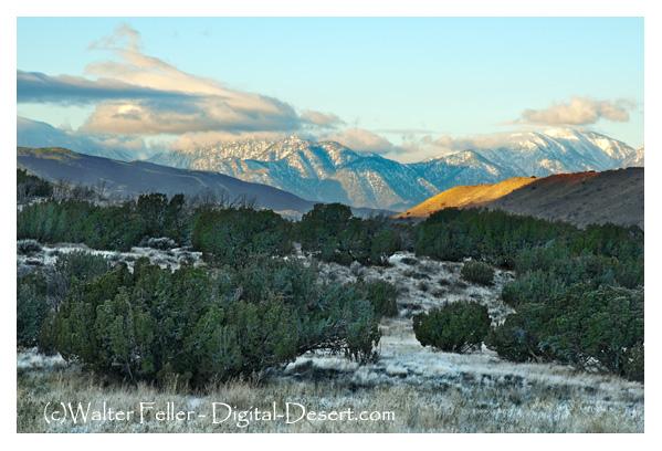 Sunrise, Juniper Woodland - Summit Valley