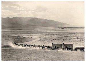 20 mule team