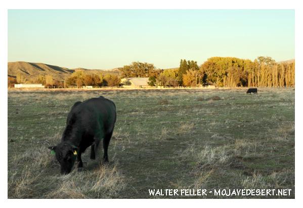 Las Flores Ranch, Summit Valley, Hesperia