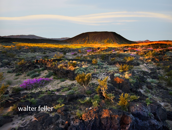 Amboy Crater in spring at sunrise
