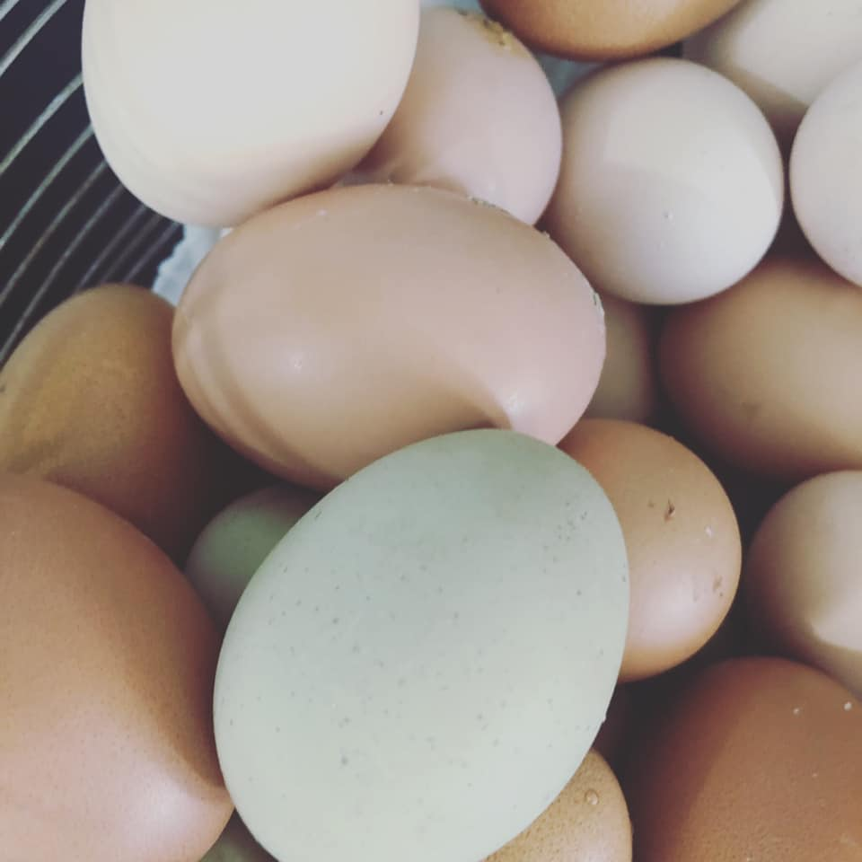 This image has an empty alt attribute; its file name is eggs-2.jpg